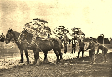 Picture of George Cook and Sons building a road near Penshurst.