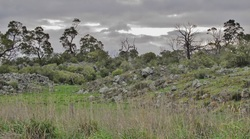 Picture of lava flow county on Hawkes Nest Road, Corangamite